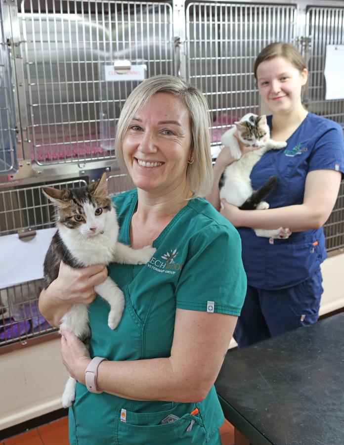 Vétérinaire et ASV